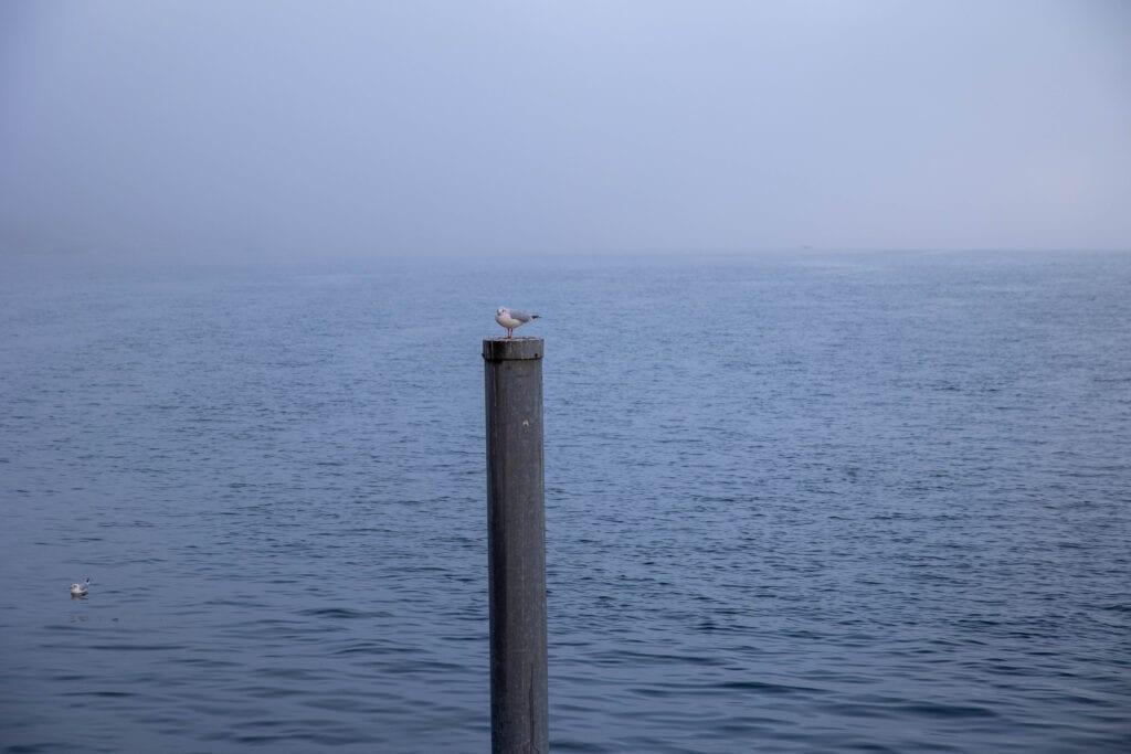 möwe auf pfahl im nebel Schöne Fotos Luzern