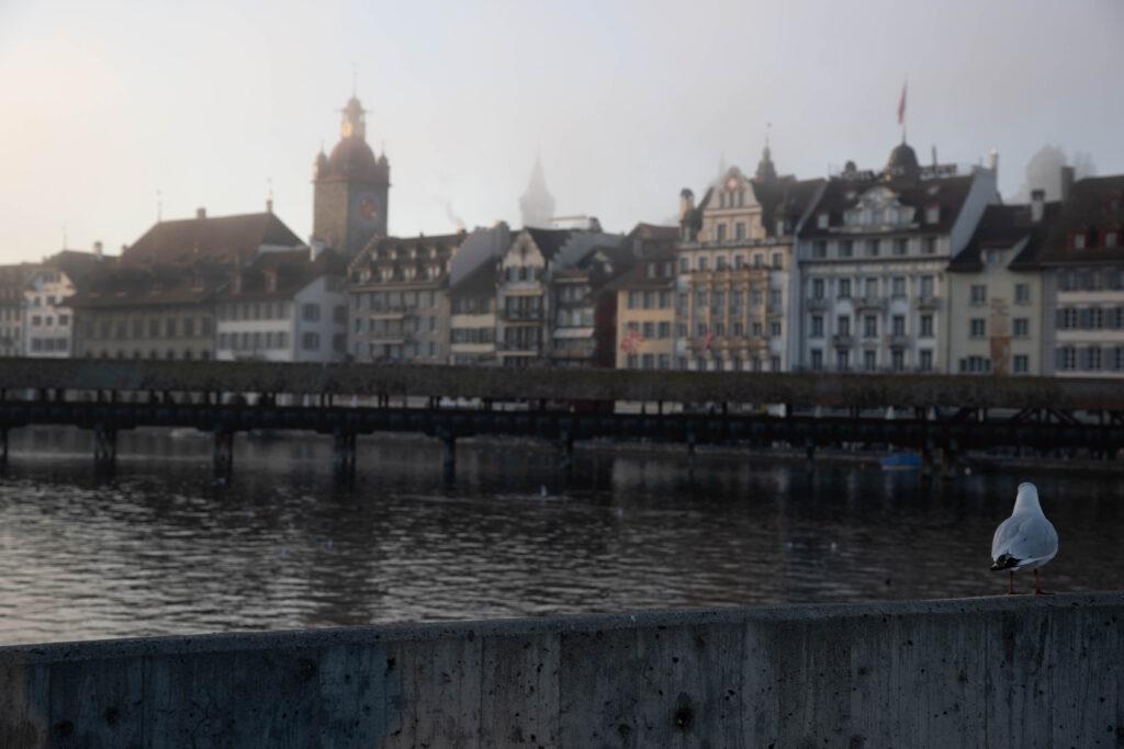 möwe schaut auf kappelbrücke schöne Fotos Luzern im Nebel